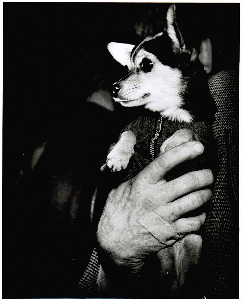 Weegee, Catherine Couturier Gallery, Dog and Bandaged Hand