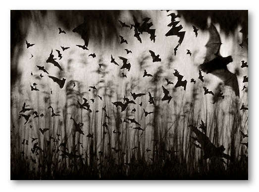 Dan Burkholder - Bats through Glass, 1989