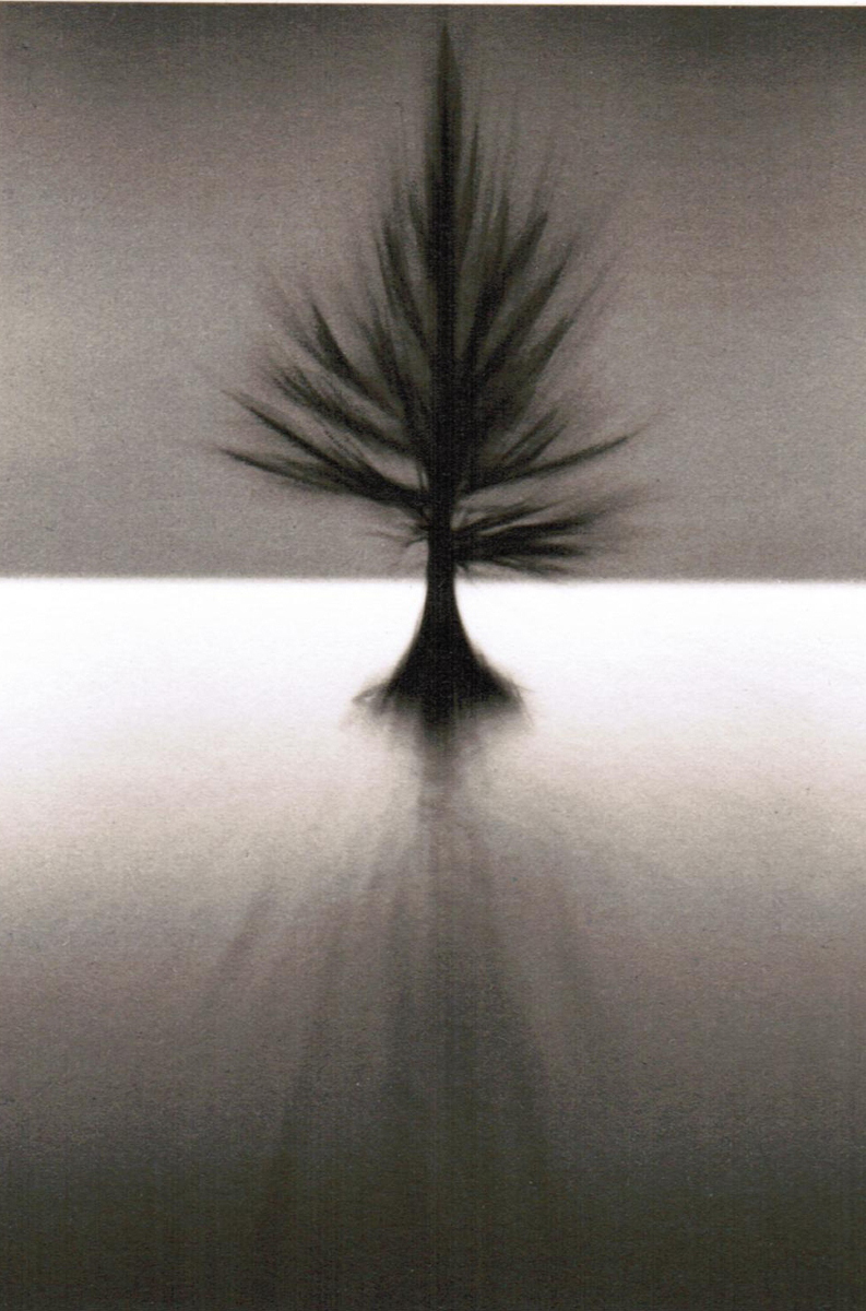 Dan Burkholder, Pine Tree in Lake, Mississippi II, 1994/1997