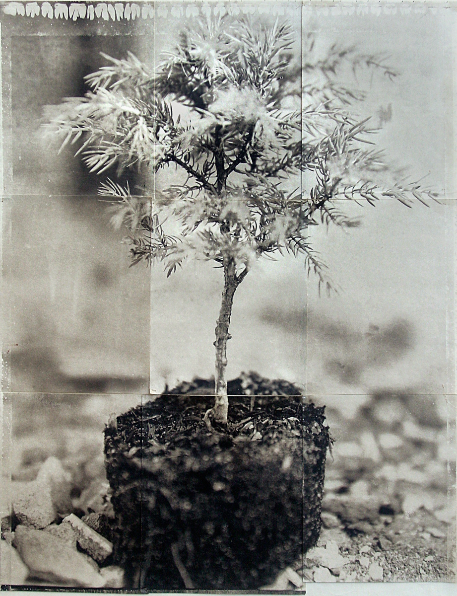 Charles Grogg, Bonsai (Rubble)