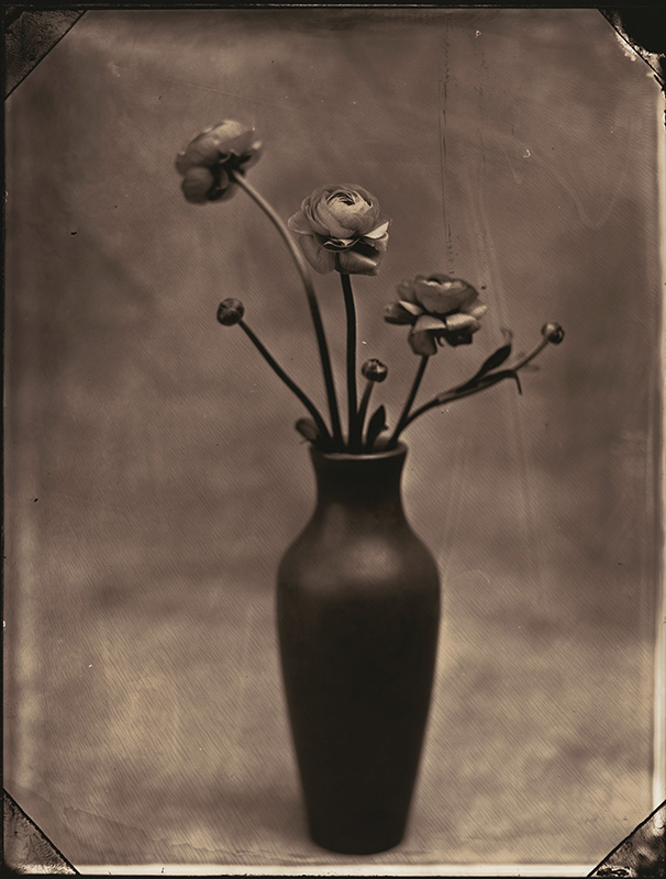 Tom Baril, Ranunculus, Silver print from wet-plate glass negative, 18-1/2 x 14 -1/4 in, 2002/2002