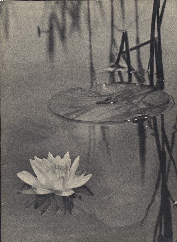 Anonymous (German), Water Lilies, Silver print, 13-1/2 x 10 in., 1920s/1920s