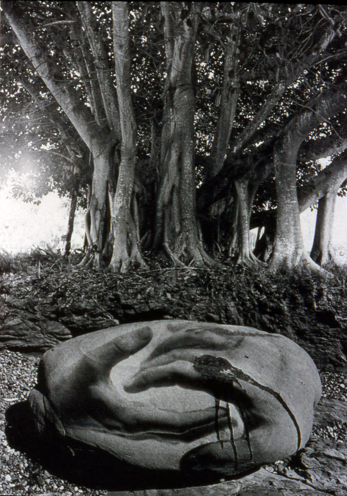 Jerry Uelsmann Untitled Rock Hands Banyan Tree Catherine Couturier Gallery