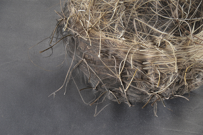 Detail of Nest 9, Kate Breakey