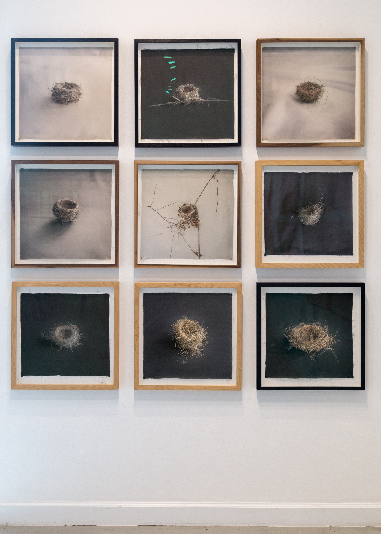 Kate Breakey, Avian, Catherine Couturier Gallery, Houston, Texas, Installation photograph by Erica Lee
