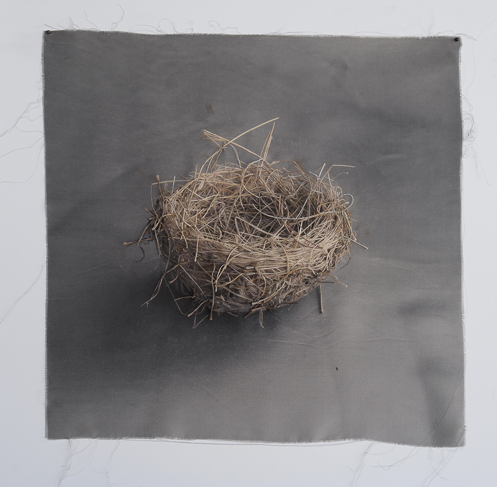 Nest 9, Kate Breakey, Catherine Couturier Gallery