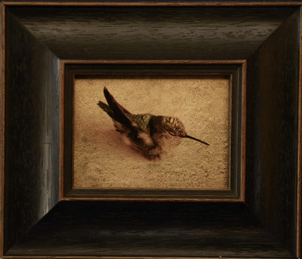 Kate Breakey, Hummingbird