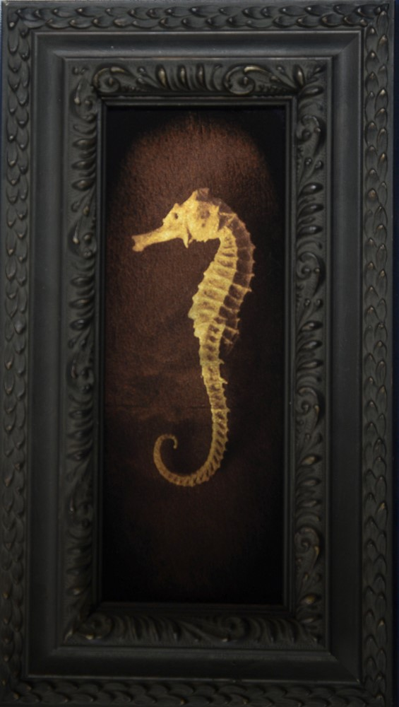 Kate Breakey, Sea Horse 1