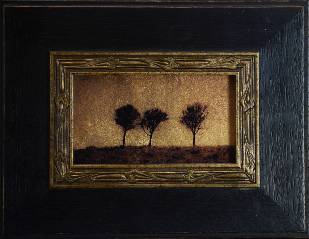 Kate Breakey, Three Sheoak Trees, Mid North, South Australia