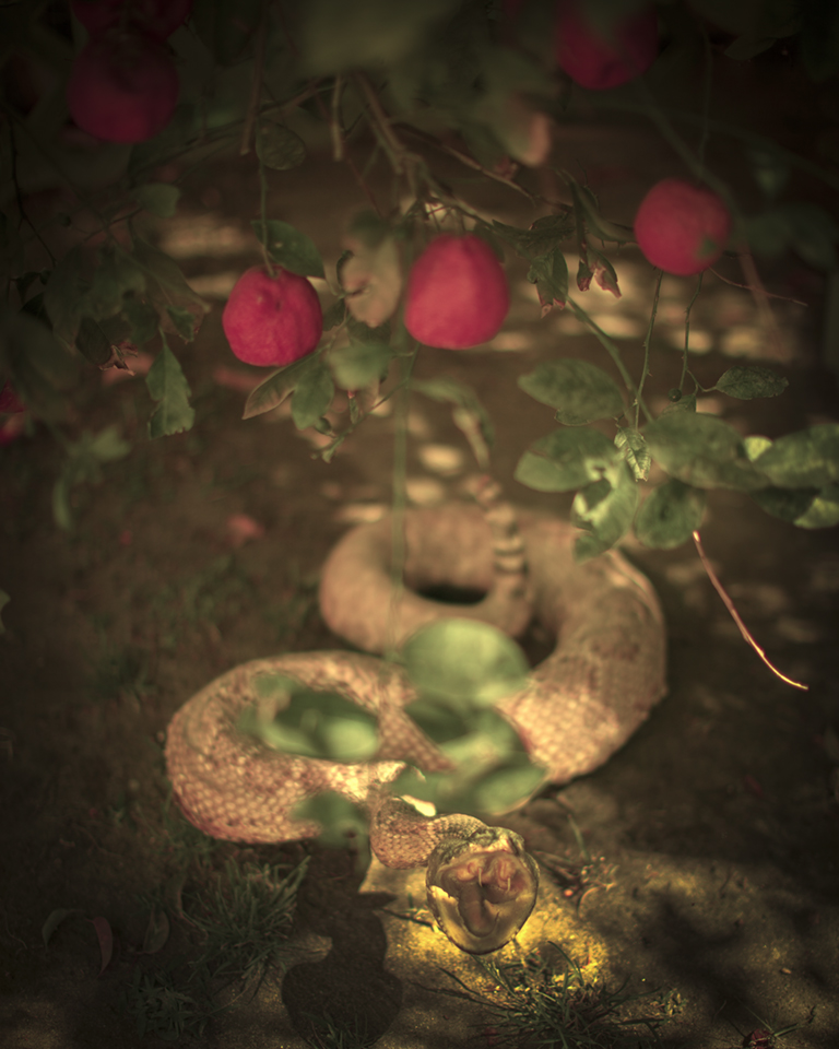 Keith Carter In the Garden