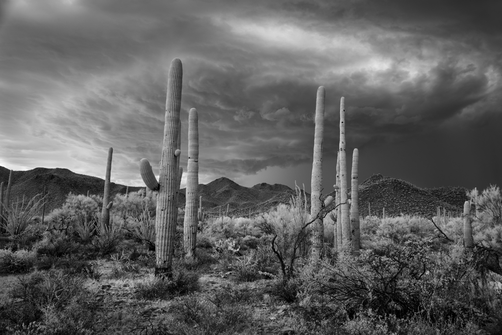 Mitch Dobrowner, Saguaro and Storm