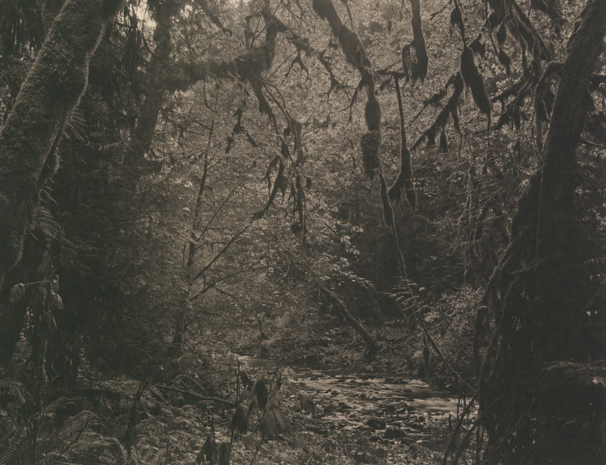 Takeshi Shikama Silent Respiration of Forests - Pacific Northwest: Lake Crescent #2