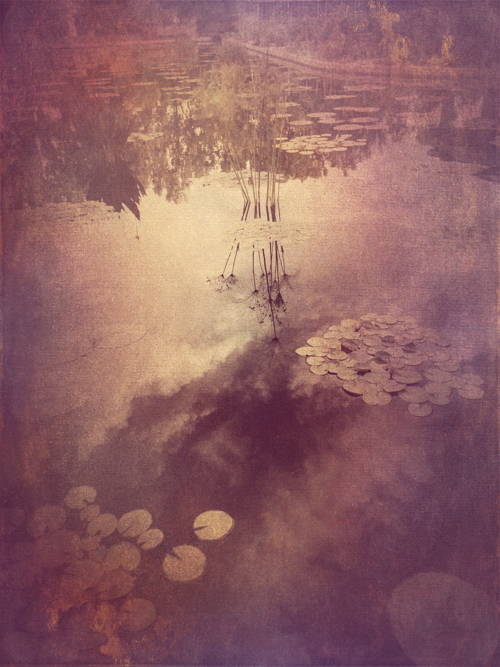 Wendi Schneider, Lily Pads, Catherine Couturier Gallery