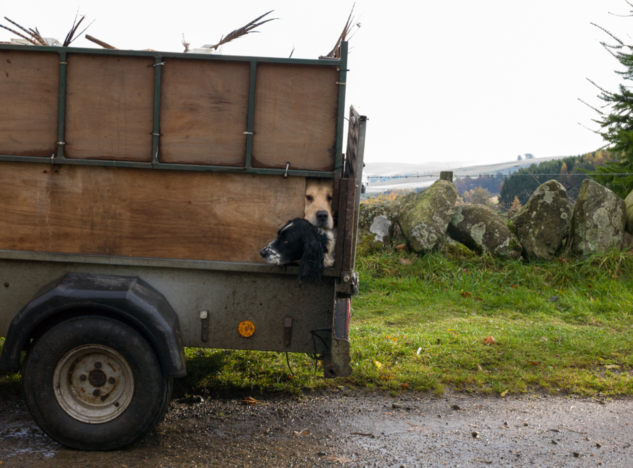 Shelley Calton Two Dogs in Trailer