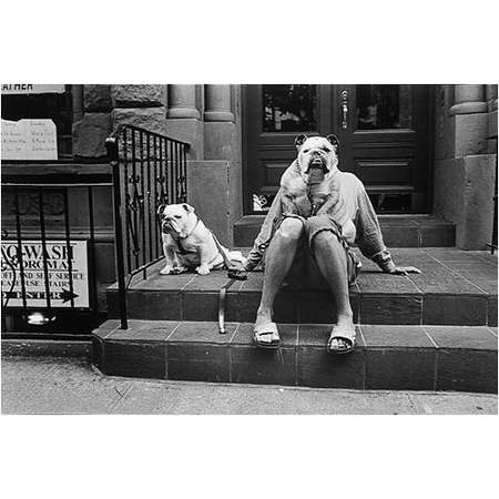 New York City (Two Bulldogs)