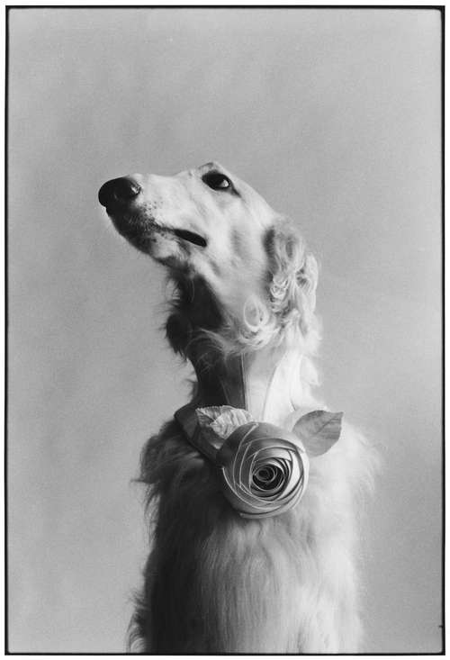 New York City, 1999 (Dog portrait)