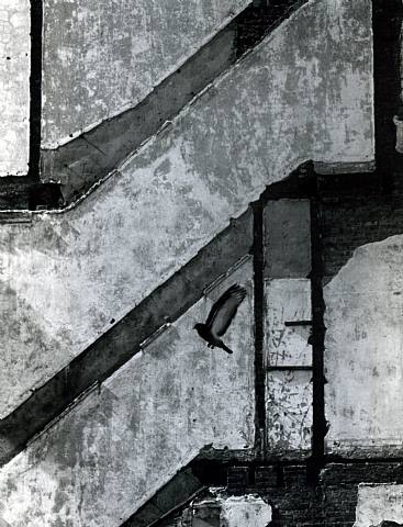 Andre Kertesz, Landing Pigeon, New York