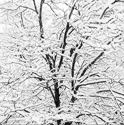 Jeff Conley, Snow Covered Branches