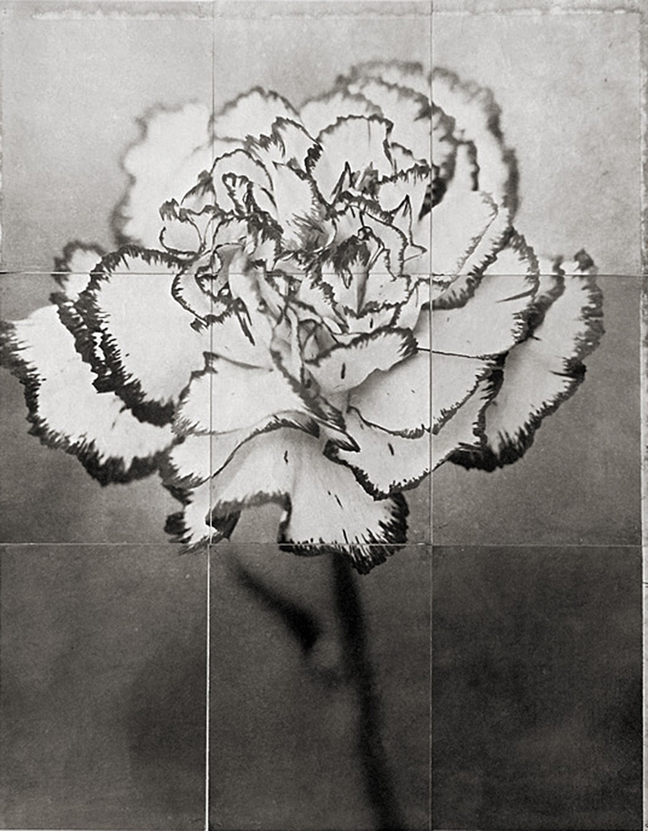 Charles Grogg, Dianthus