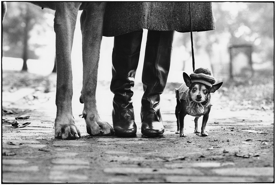 Elliott Erwitt New York City, 1874 (dog legs)