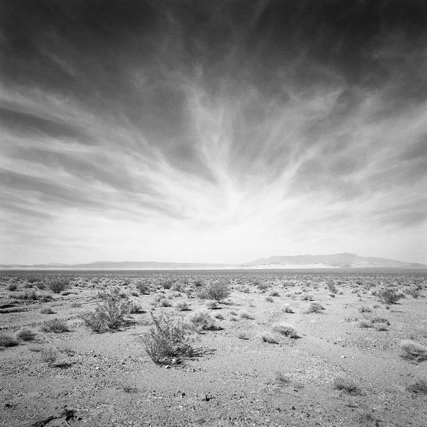 Mojave Desert Native Plants: Catherine Couturier Gallery - Houston