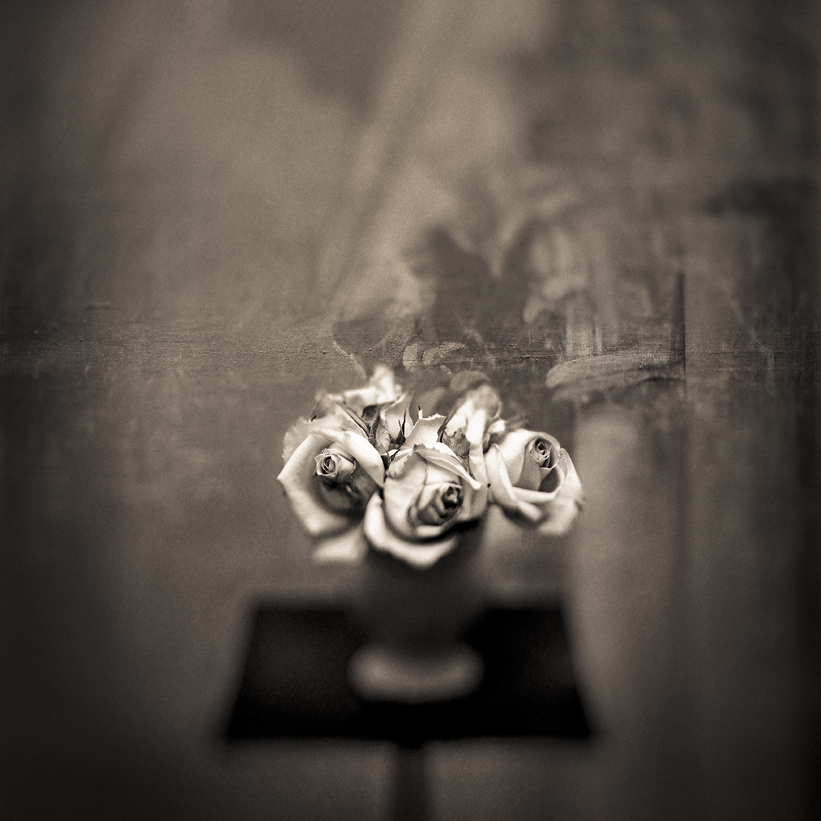 Keith Carter, White Roses, 1998