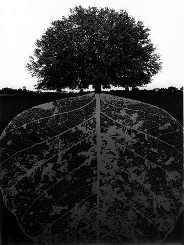 Jerry Uelsmann Untitled Tree with Leaf Root System Catherine Couturier Gallery