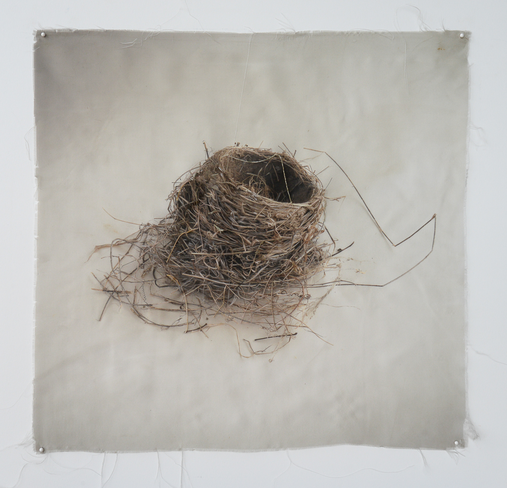 Nest 2, Kate Breakey, Catherine Couturier Gallery