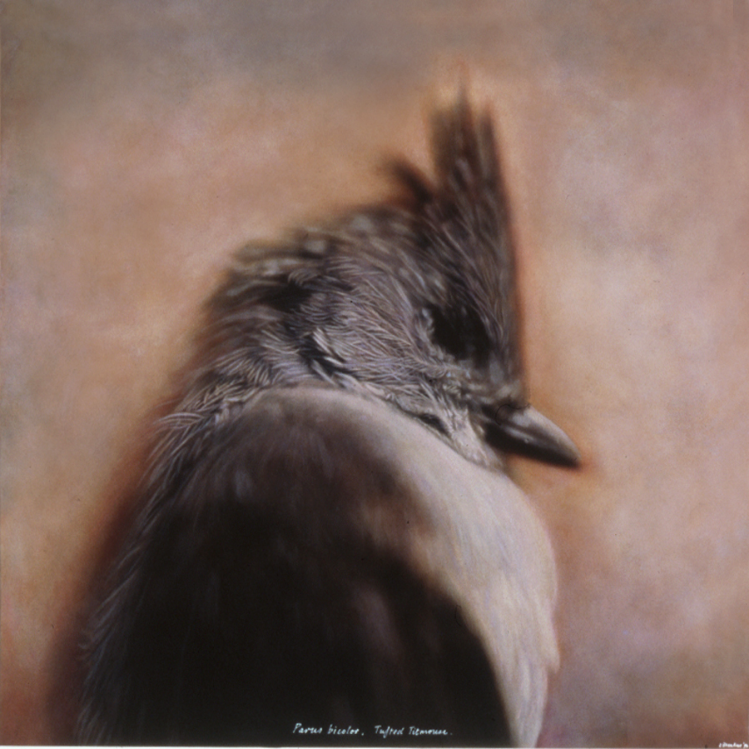 Parus Bicolor, Tufted Titmouse, 1995/1996, Kate Breakey, Catherine Couturier Galley