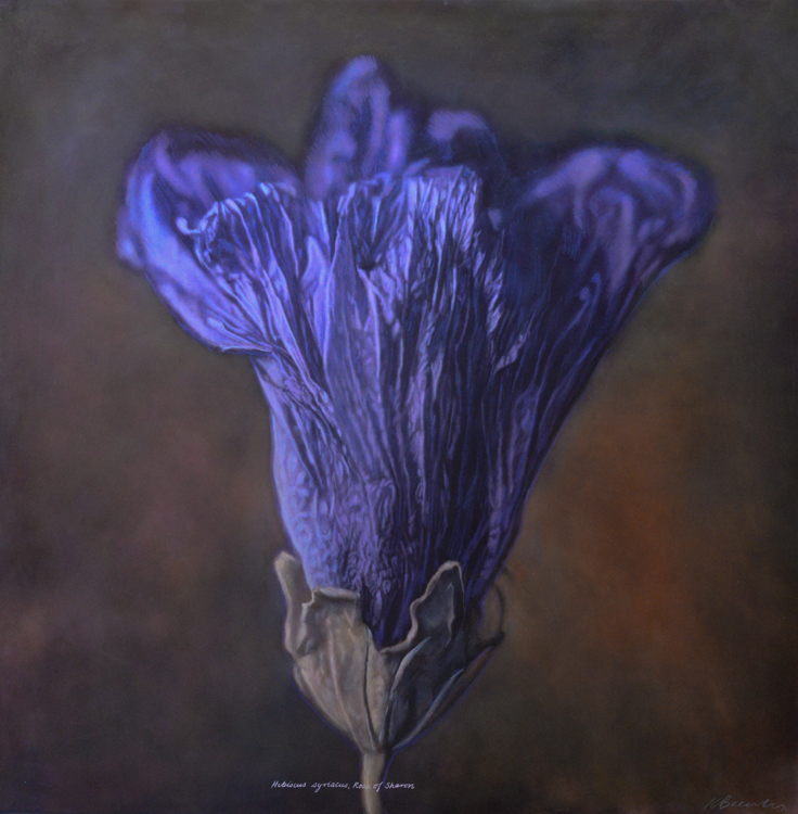 Kate Breakey, Hibiscus syriacus, Rose of Sharon Althaea, Silver Gelatin photograph, hand-colored with oils & pencils