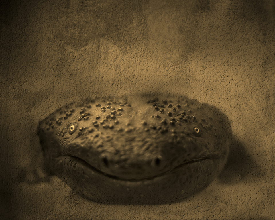 Keith Carter Hellbender