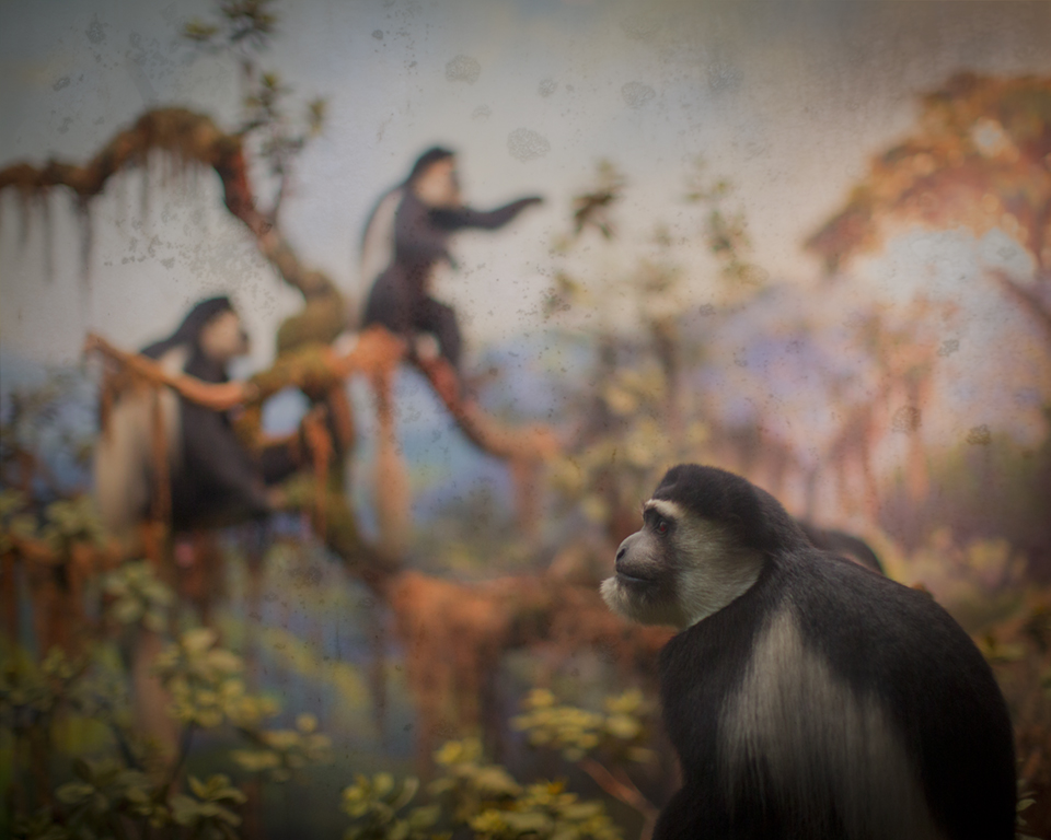 Keith Carter Primates