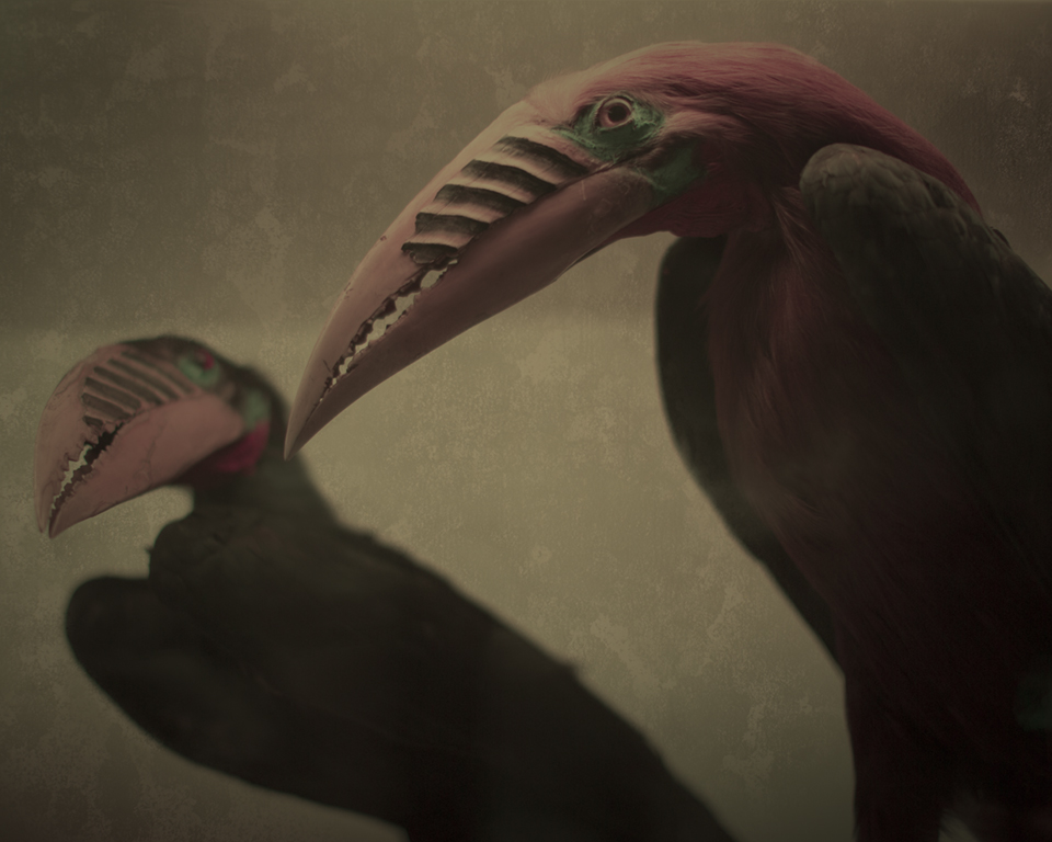 Keith Carter Toucans