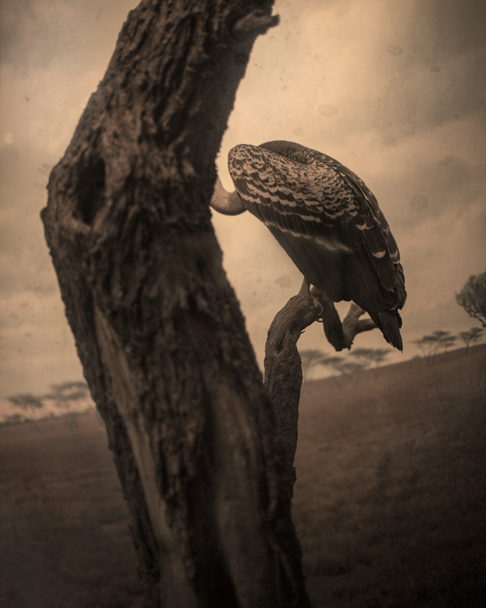 Keith Carter Vulture