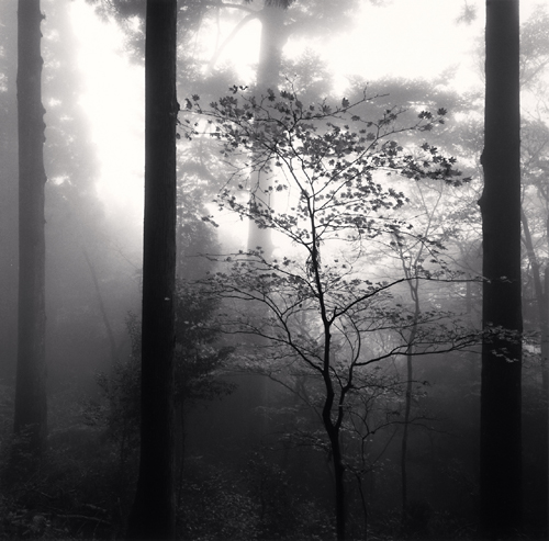 Michael Kenna, Autumn Leaves, Unpenji, Shikoku, Catherine Couturier Gallery