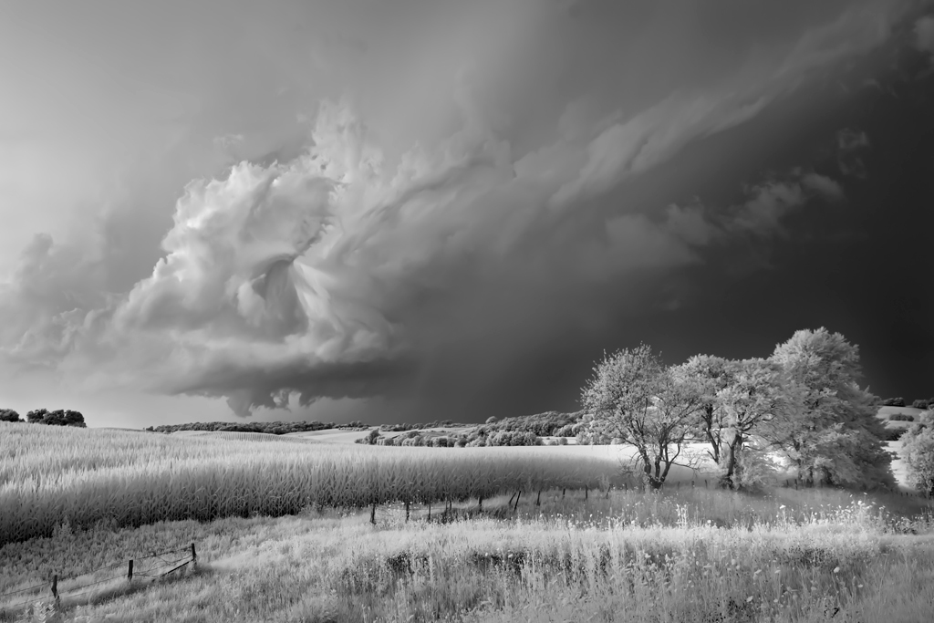 Storm, Field and Trees, Mitch Dobrowner, Catherine Couturier Gallery