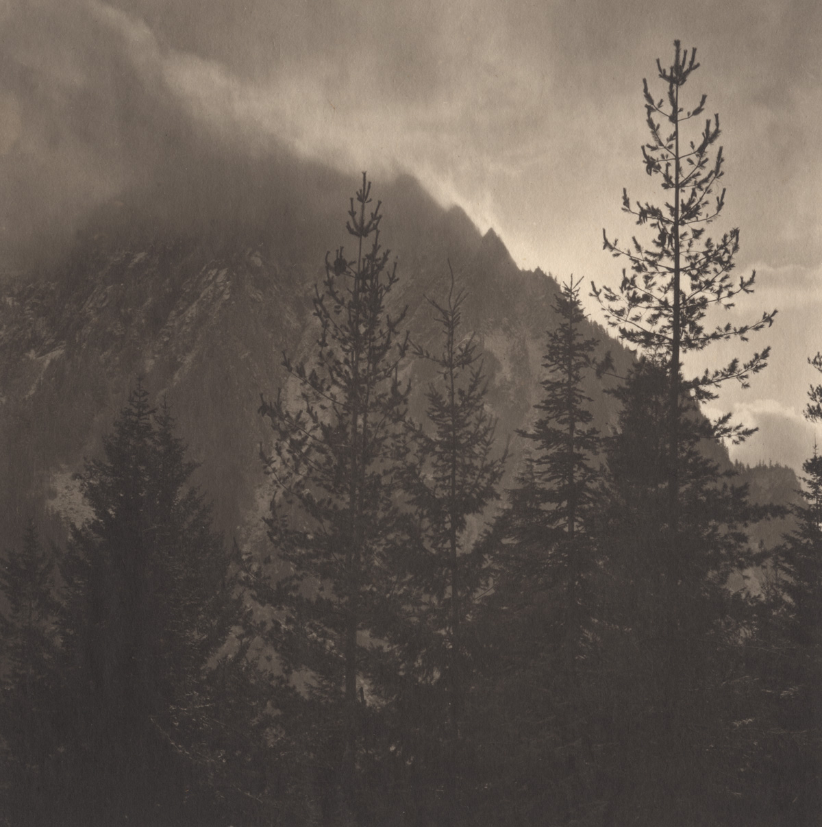 Takeshi Shikama Silent Respiration of Forests - Pacific Northwest: Mt. Rainer #4