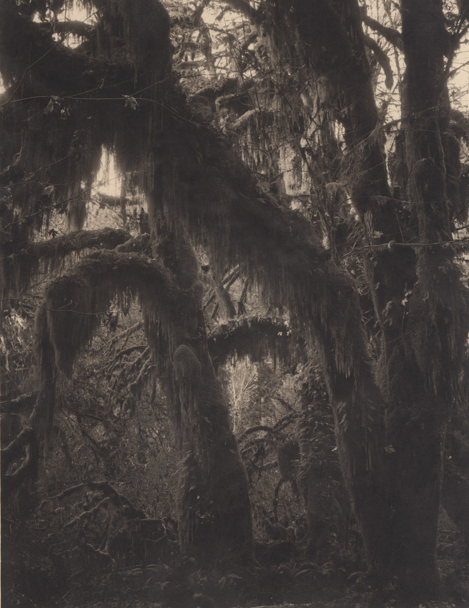 Tikeshi Shikama Silent Respiration of Forests - Pacific Northwest: Quinault Rainforiest #3