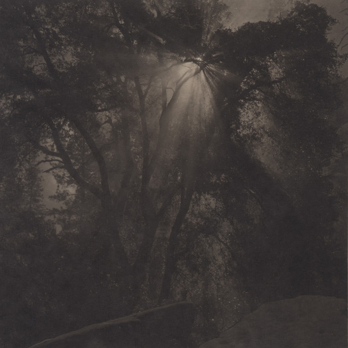 Takeshi Shikama Silent Respiration of Forests - Yosemite #2