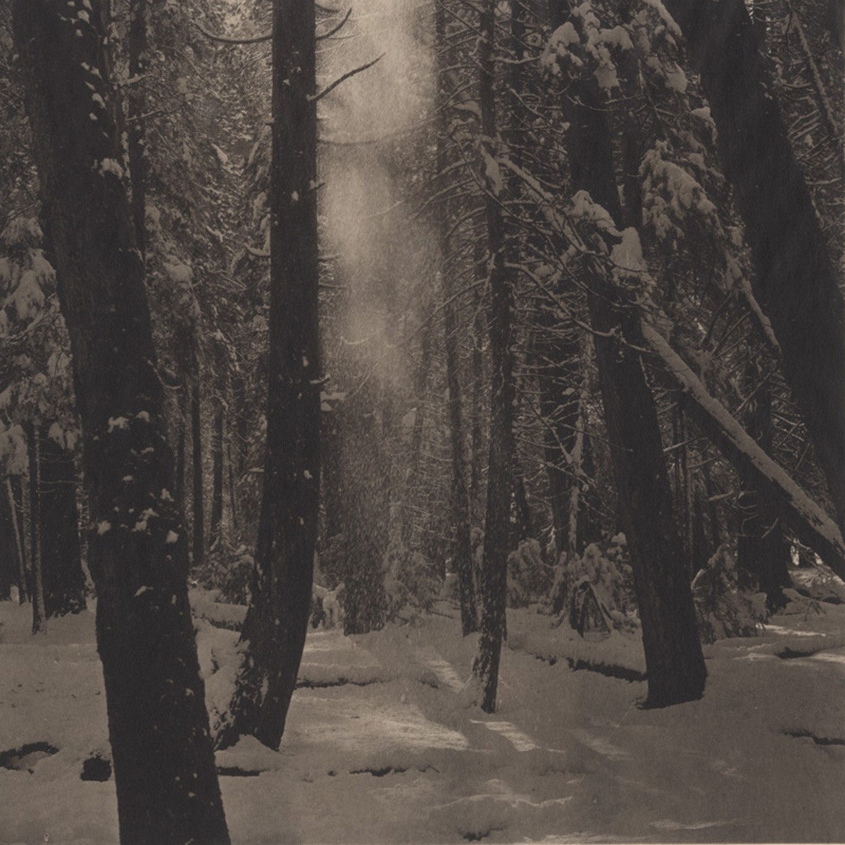 Takeshi Shikama Silent Respiration of Forests - Yosemite #6