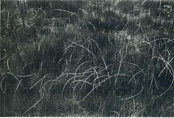 Harry Callahan, Grasses, Wisconsin, 1958, Catherine Couturier Gallery